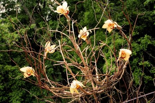 amber white 089.jpg